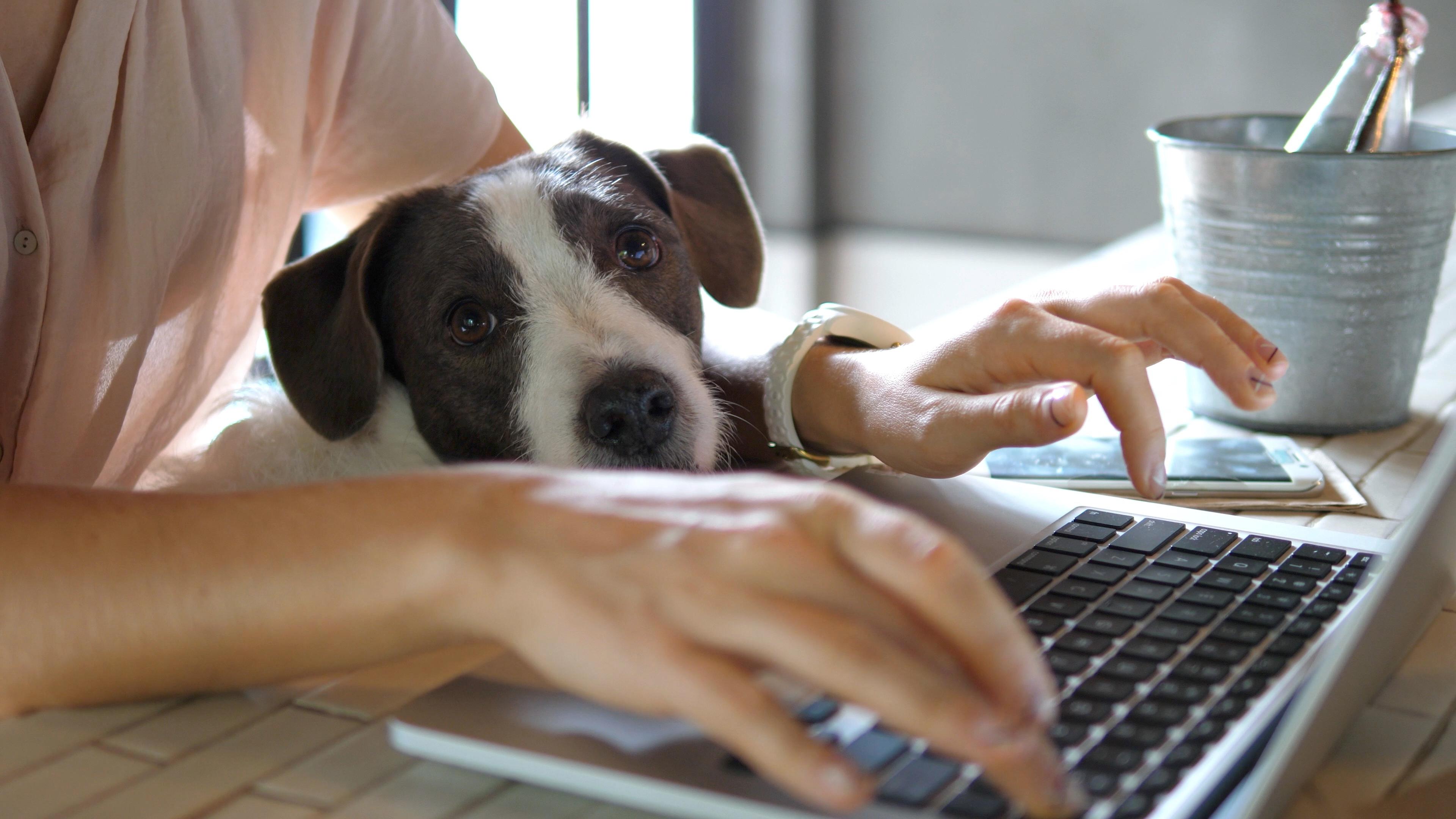 reward_recognition_office_dog